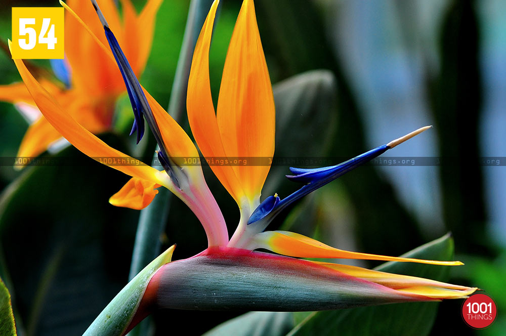 Bird Paradise at Lloyd Botanical Garden, Darjeeling