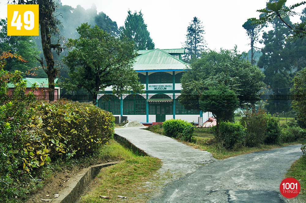 Deer Park featured image, Kurseong