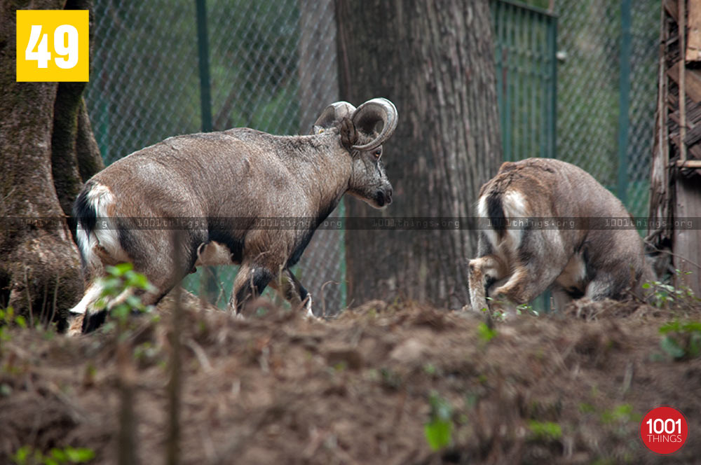 Deers at Deer Park, Kurseong