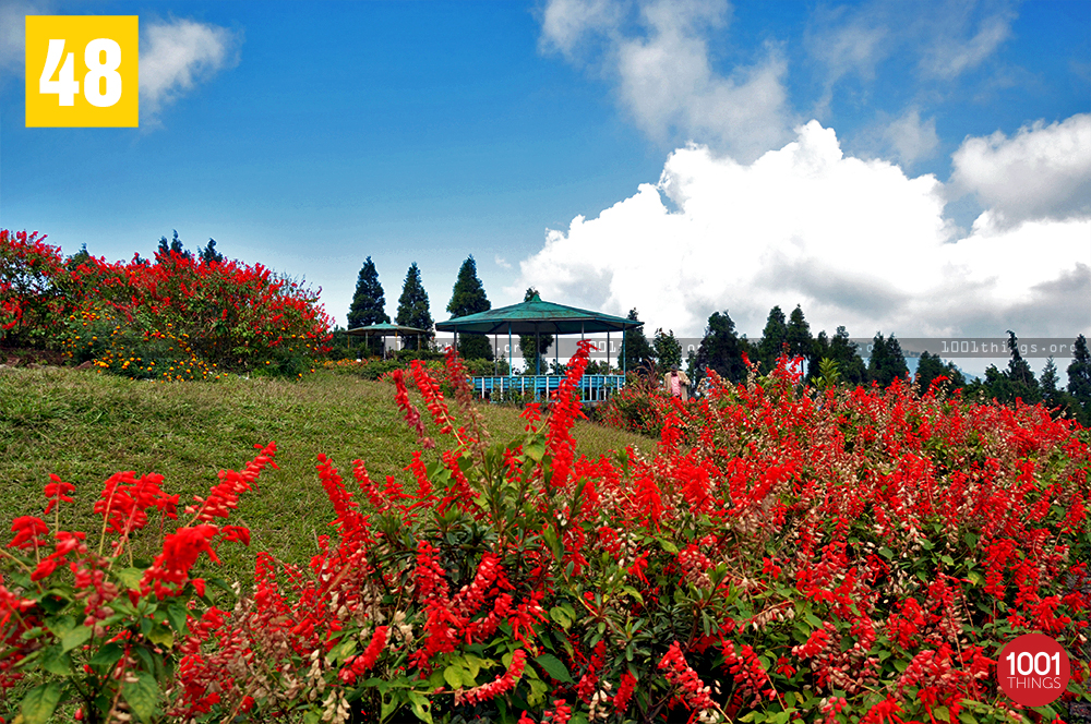 Flowers at Deolo, Kalimpong