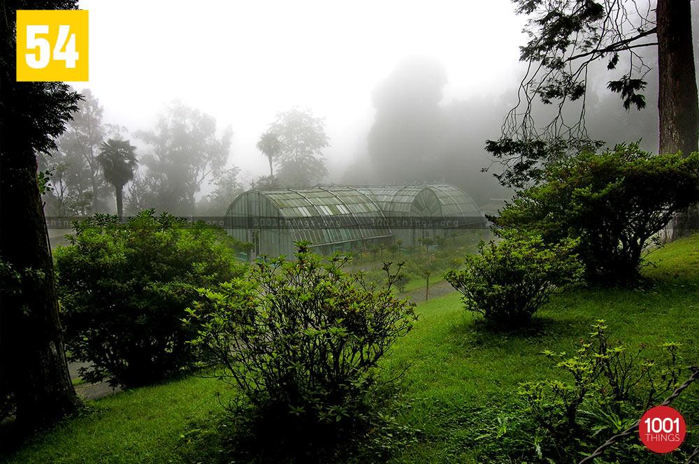 Fog at Lloyd Botanical Garden, Darjeeling