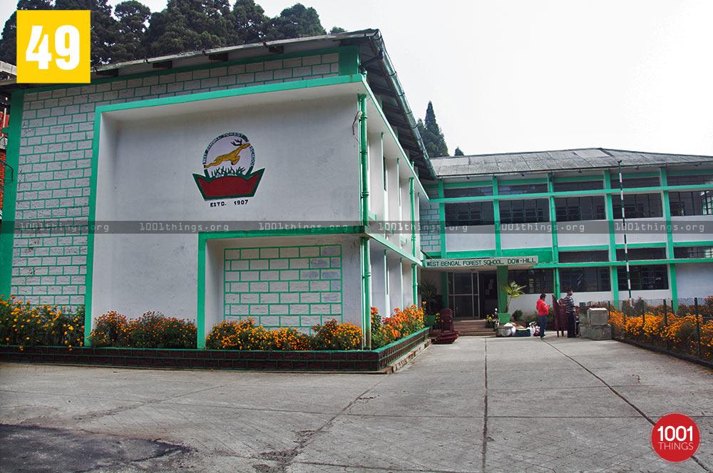 Forest School at Deer Park, Kurseong