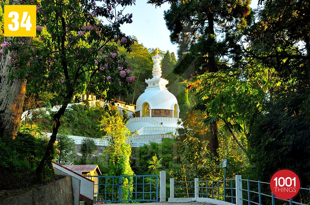 Greenary at Peace Pagoda in Darjeeling