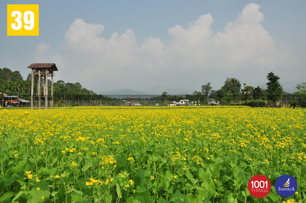Mustard Field at Buxa Tiger Reserve, Dooars.