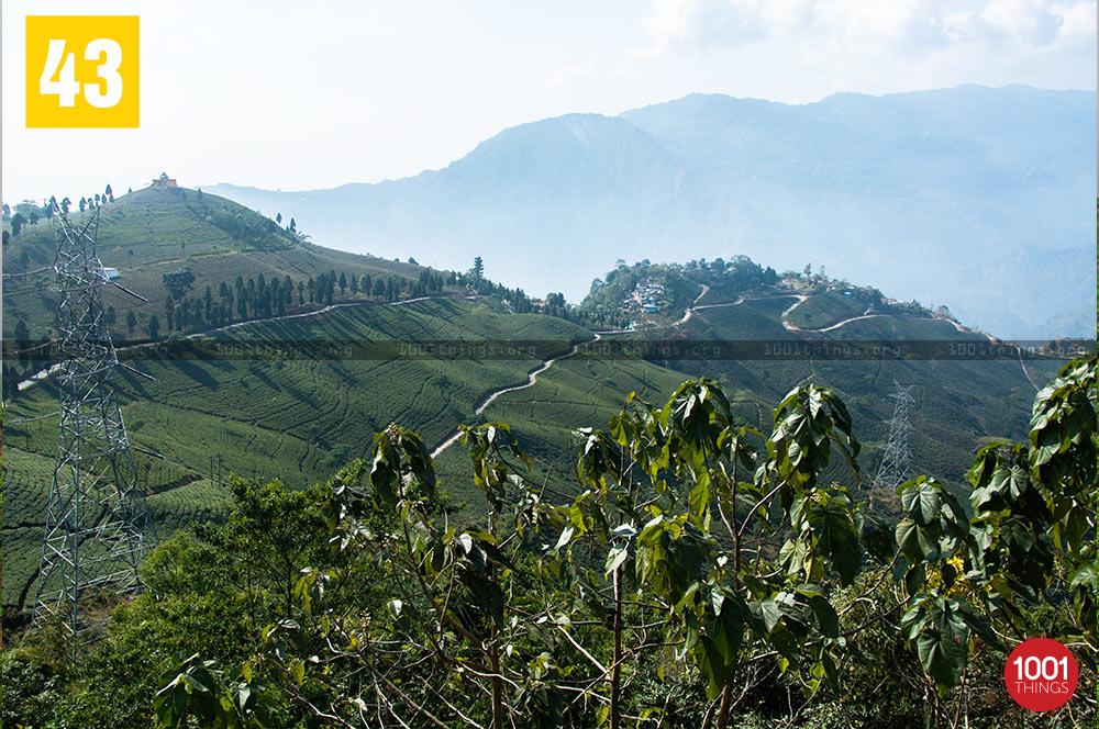 View of Tingling at Mirik Tea Garden