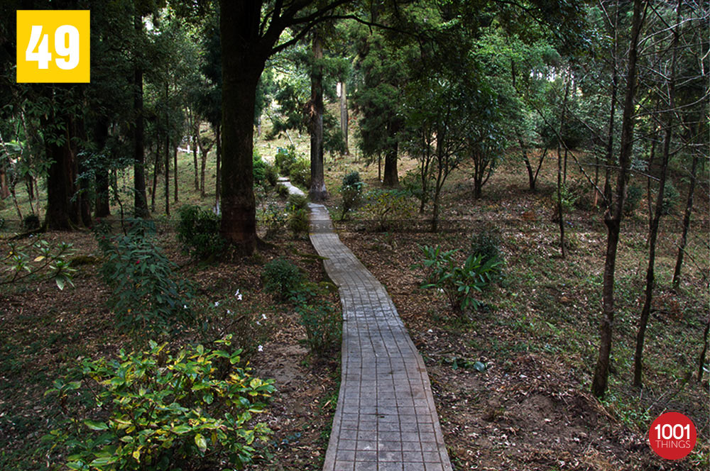 Walk way through Deer Park, Kurseong