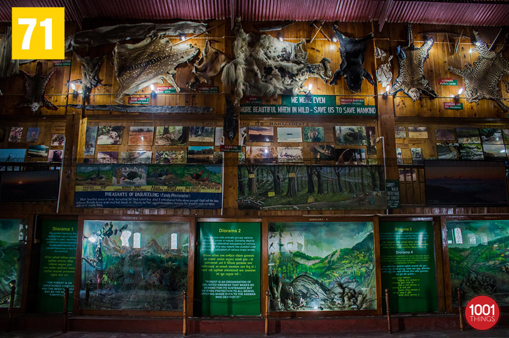 Animal skins at Nature Interpretation Centre, Kalimpong