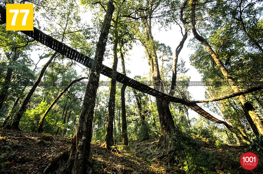 Below of Hanging bridge canopy walkway, lolegaon