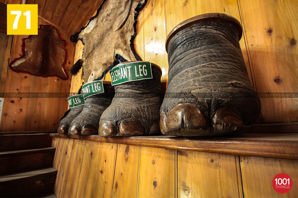 Elephant feets at Nature Interpretation Centre, Kalimpong