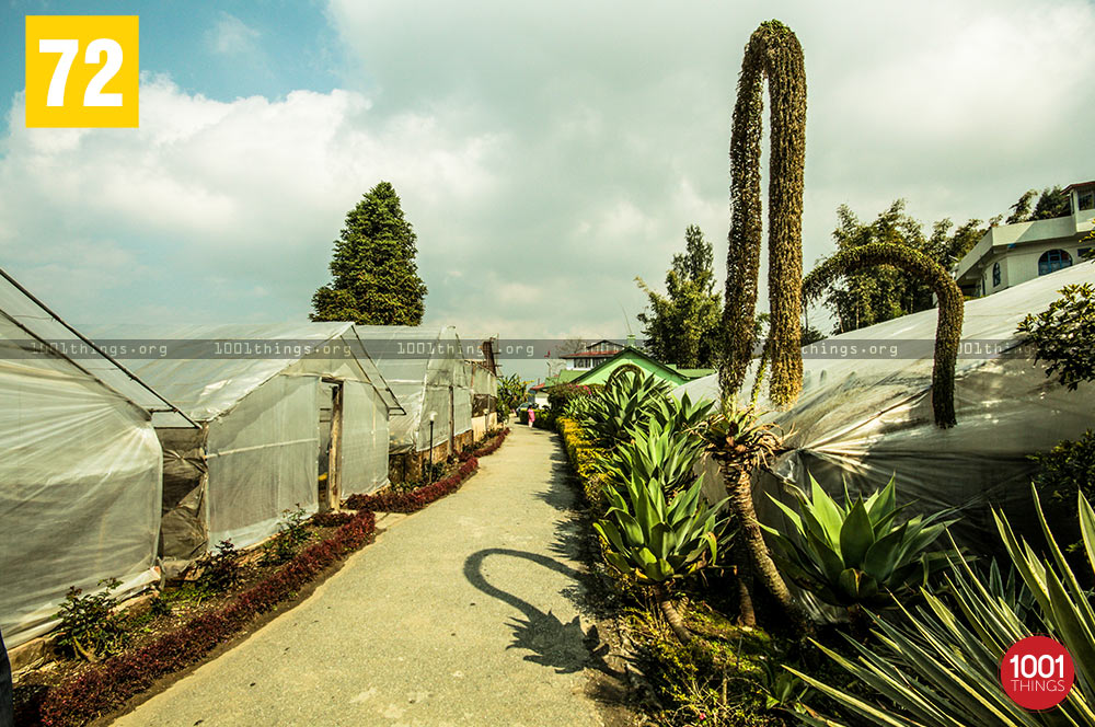 Green House at Pine View Nursery, Kalimpong
