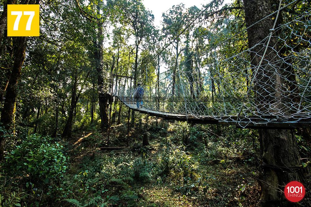 Greenary at Hanging bridge canopy walkway, lolegaon