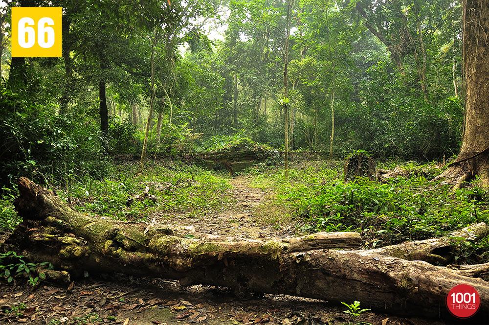 Nalraja Garh at Chilapata Forest