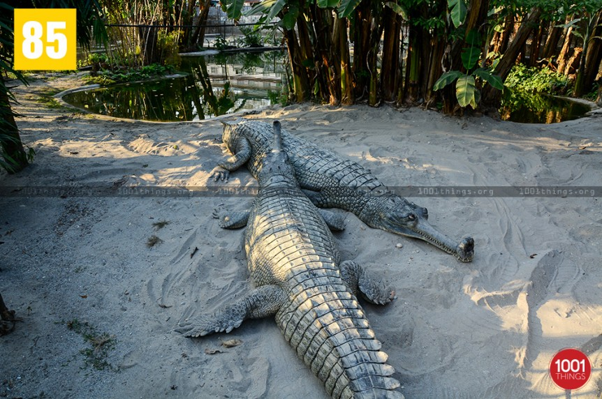 Crocodile Farm, Phuentsholing, Bhutan