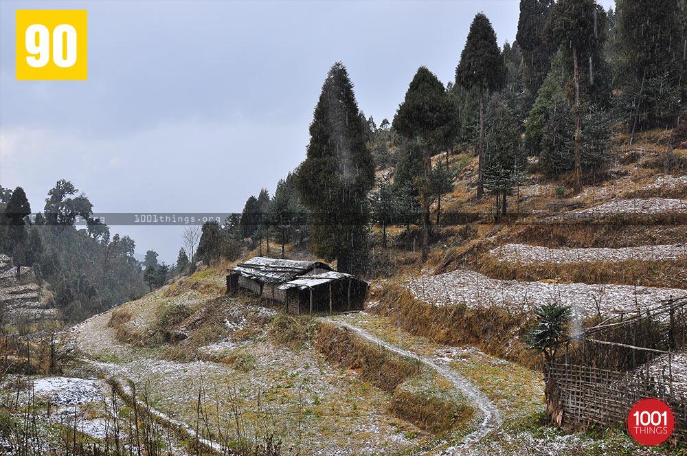 Snowfall at Dhotrey, Darjeeling