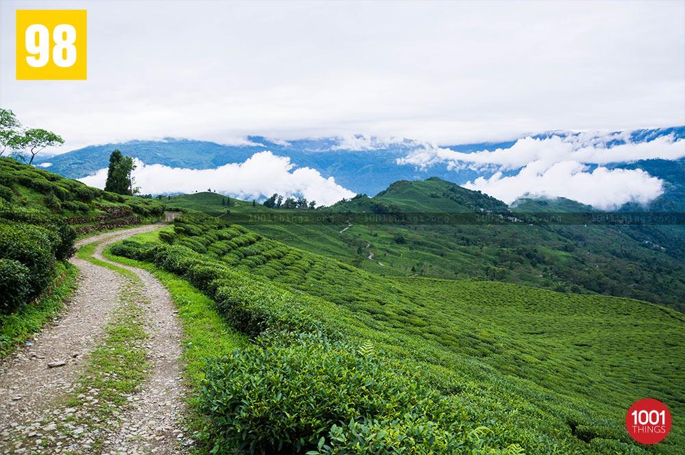 Tea Gardens at Teesta Valley Durpin Dara Image
