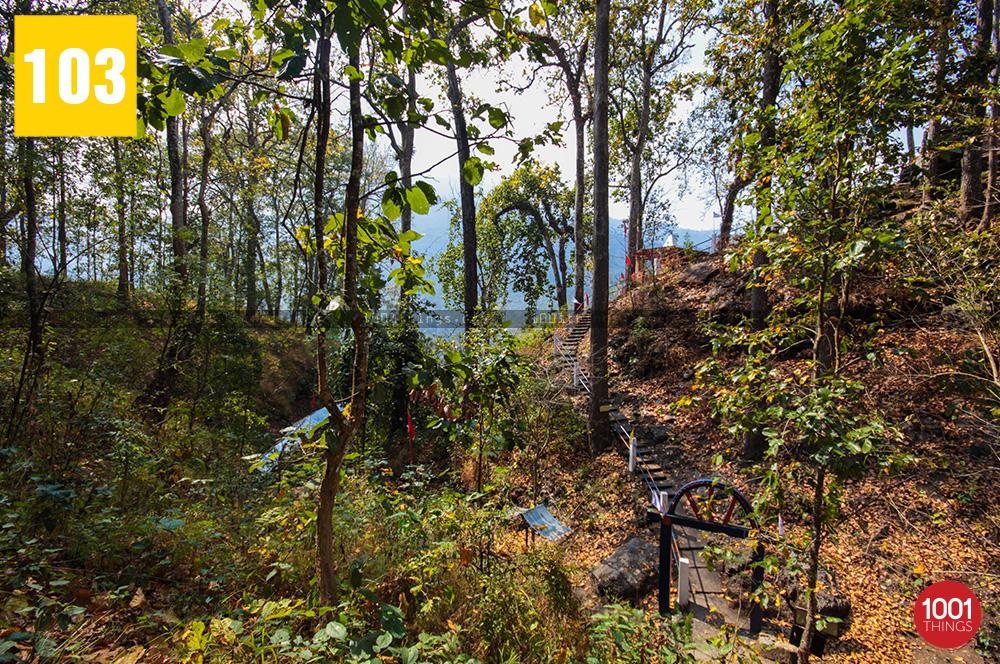 Forest at 3rd Mile Mandir, Kalimpong