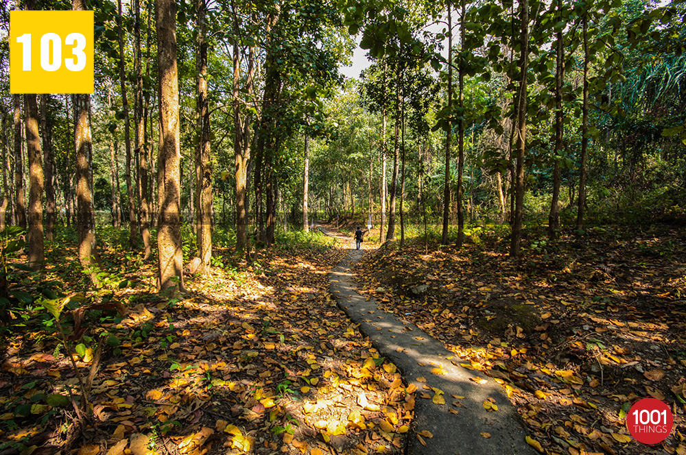 Way to 3rd Mile Mandir, Kalimpong