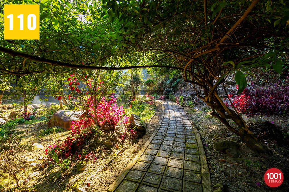 Gangamaya-park-Darjeeling-beautiful-walkways-through-the-bushes