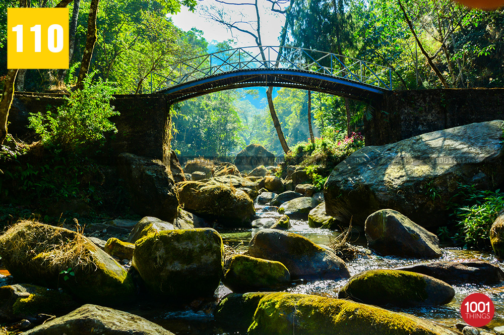 Gangamaya-park-Darjeeling-small-bridges-over-the-streams