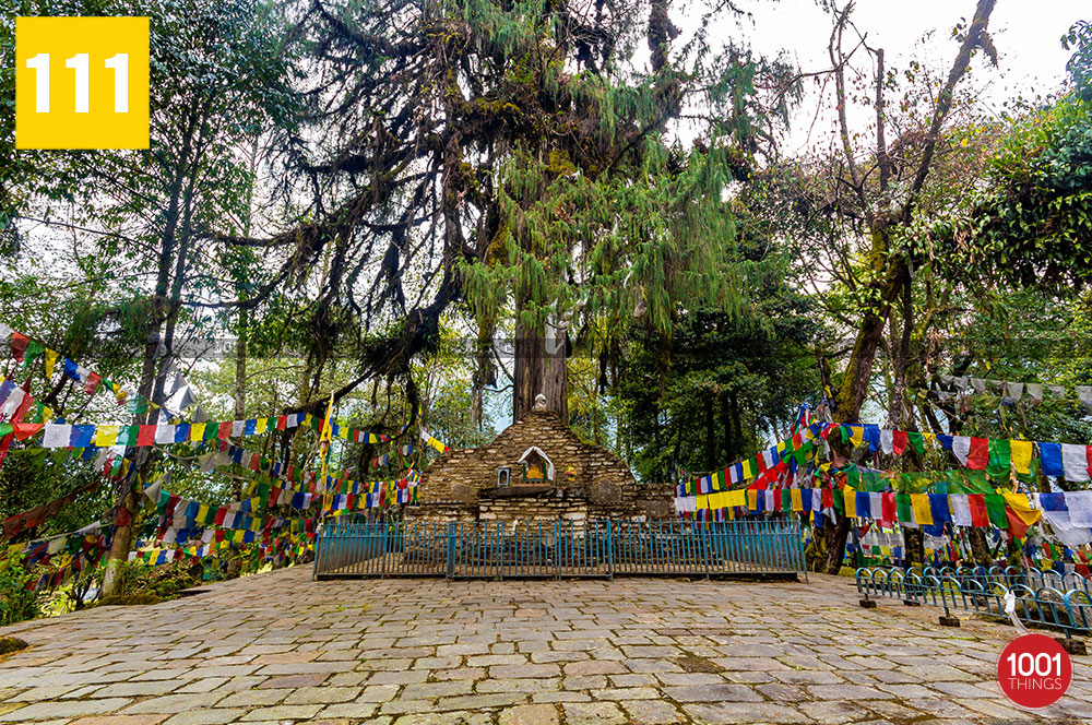 Norbugang-Chorten-and-coronation-throne,-the-old-pine-tree-behind-the-throne