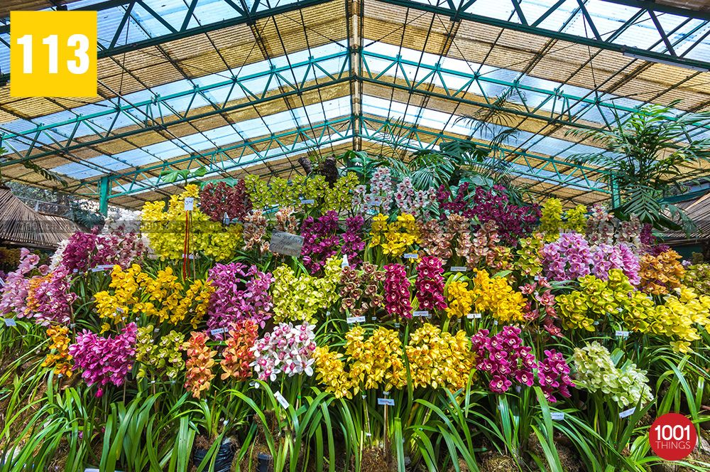 different-species-of-orchid-at-flower-exhibition-centre