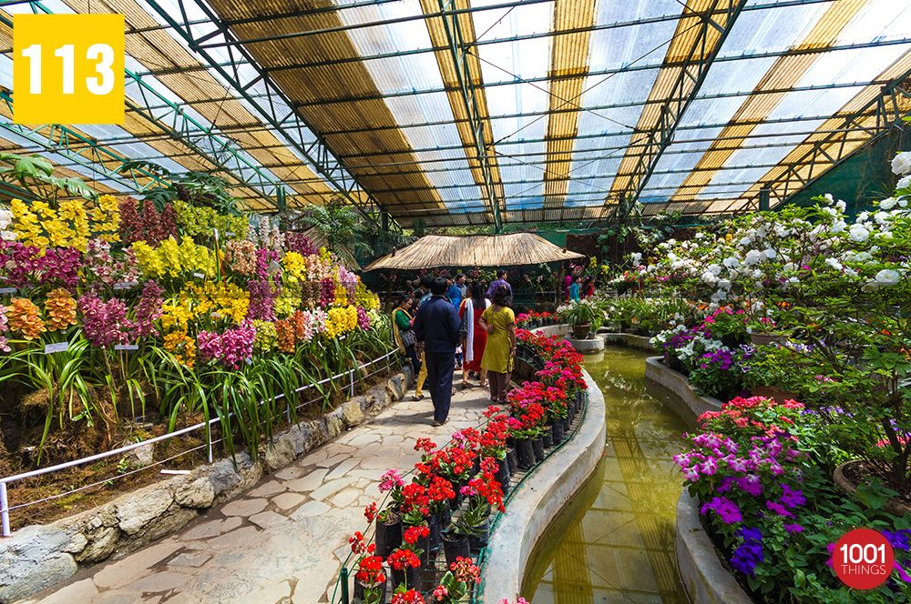 tourist-visitor-at-flower-exhibition-centre