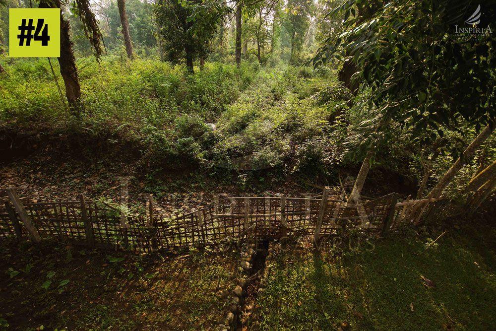 gorumara national park in west bengal
