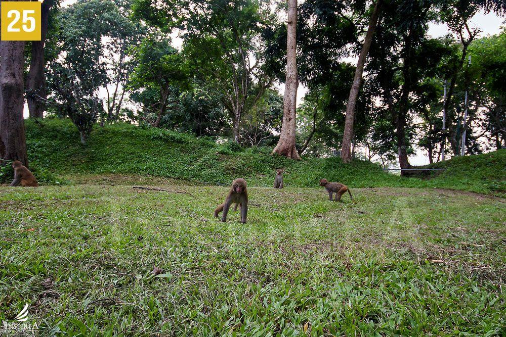 monkey-madhuban-park-sukna-siliguri1-wb