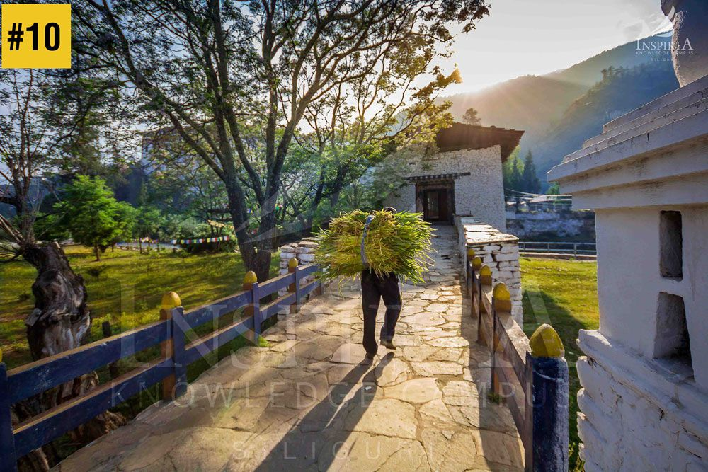 ringpung-dzong-paro-man-carrying-grass-bhutan