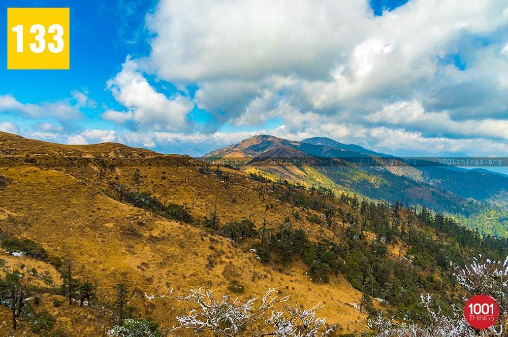 Phalut, Darjeeling