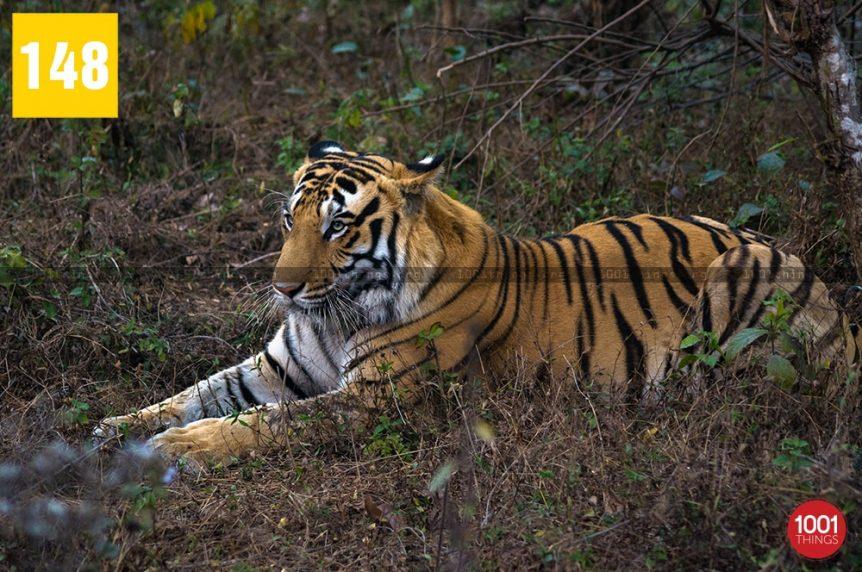 Bengal-Safari