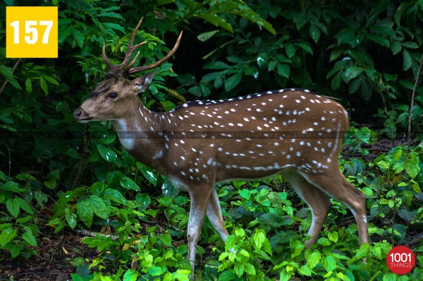 Adina Deer Park, Malda