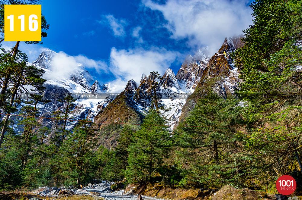 Yumthang Valley14 1