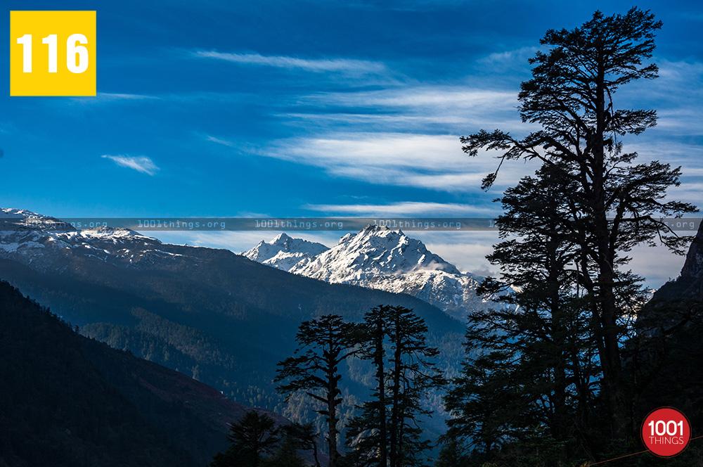 Yumthang Valley17 1